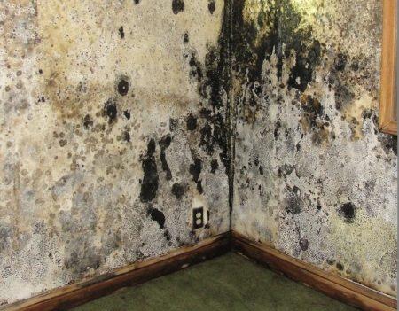 Moldy Walls