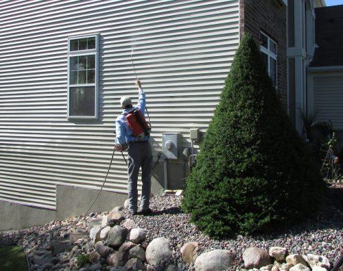 Spraying for boxelder bugs
