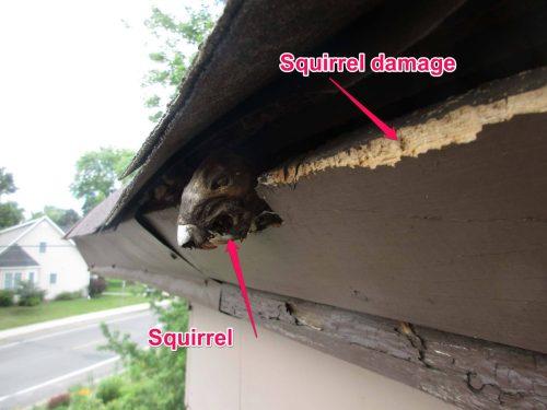 stuck squirrel