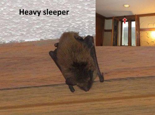 Bat in bedroom