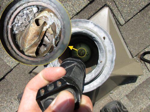 Frog in plumbing vent
