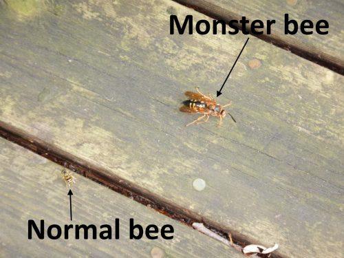 monster bee