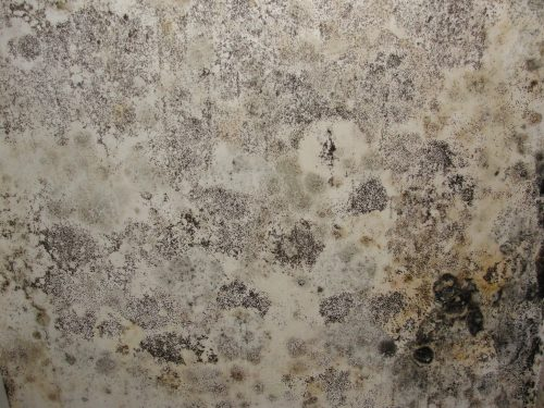Mold covered wall