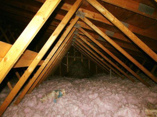 nest in attic