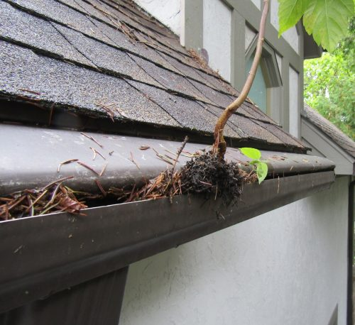 tree growing out of gutter