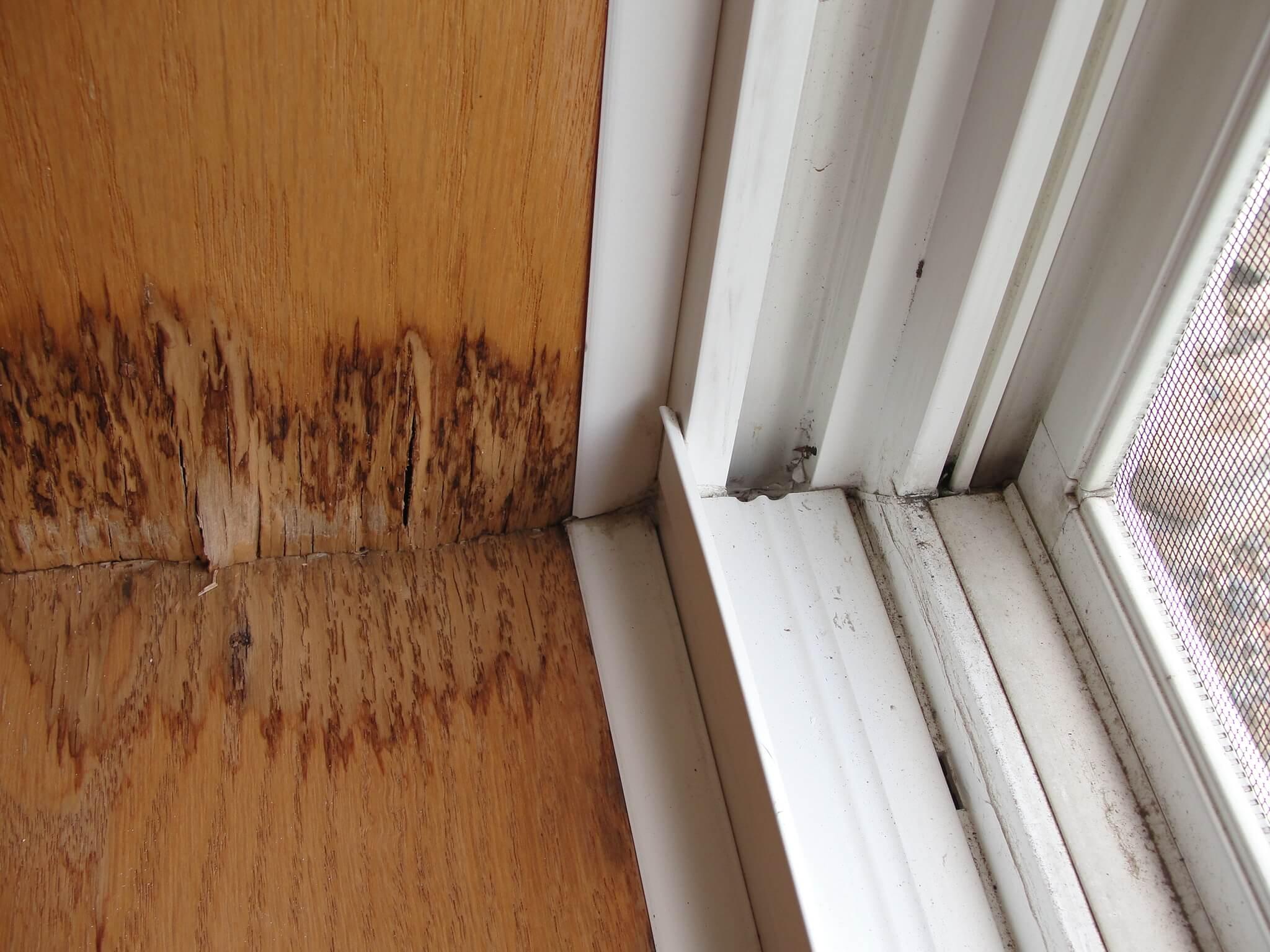 window stain