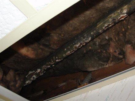 Rust holes in galvanized steel vent