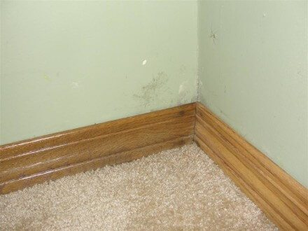 Stained baseboard trim