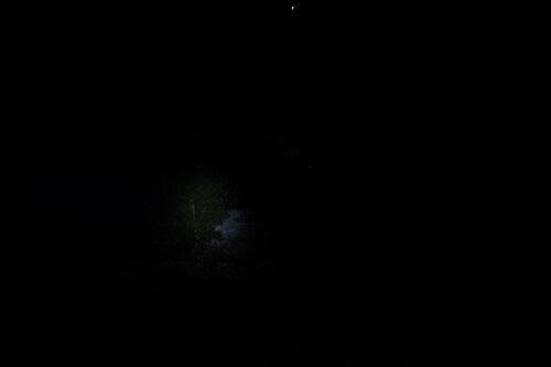 Generic CREE Headlamp outdoors.JPG