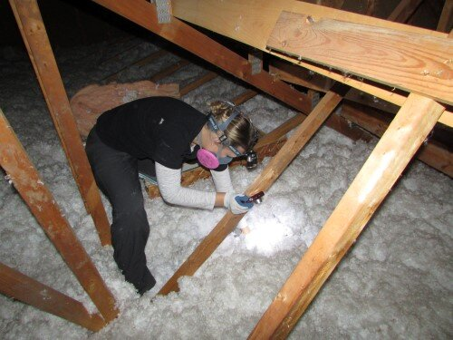 Tessa in an attic