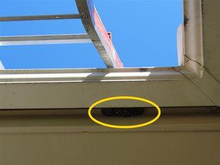 Wasp Nest Under Gutter