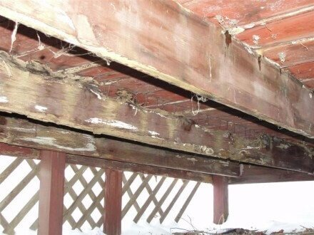 Rotted deck joists 2