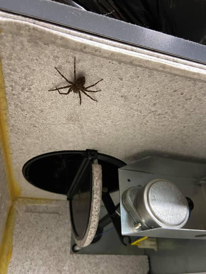 Spider in HRV.jpg